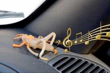 Как убрать скрипы в автомобиле